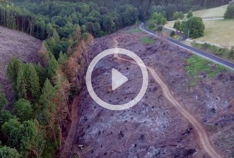 forest-fire-survey
